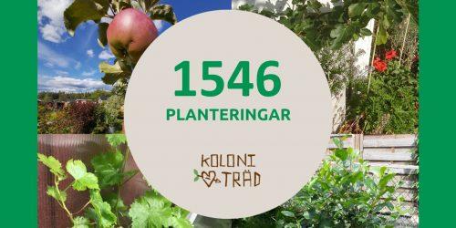 1546_träd